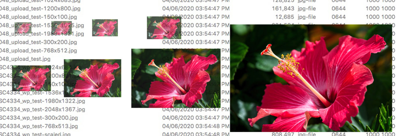 Illustration of resized images created by WordPress